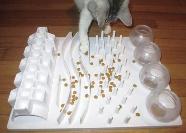 Cat Food Games
