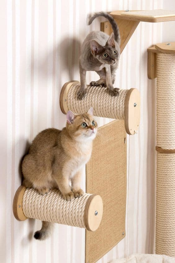 Climbing for your Cats