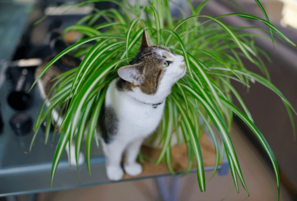Leafy Plants with Cat