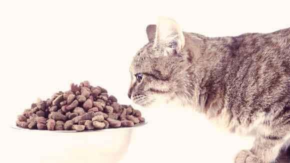 best grain free cat food Reviews