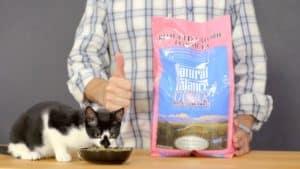 Natural Balance Cat Food Review