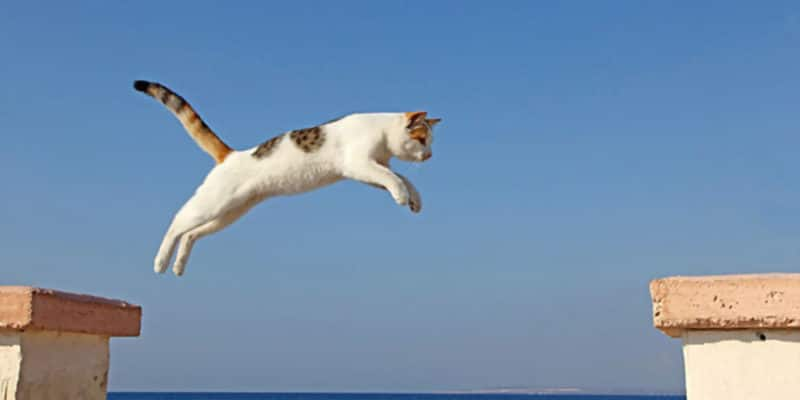 How High Can Cats Jump