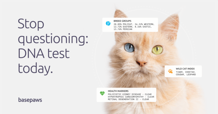 best cat dna test