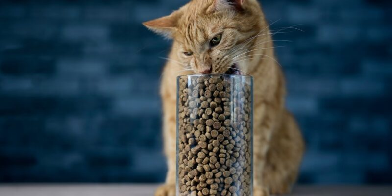 Best Dry Cat Food for Outdoor Cats