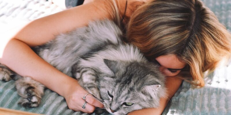 Best Cat Food For Healthy And Shiny Coat