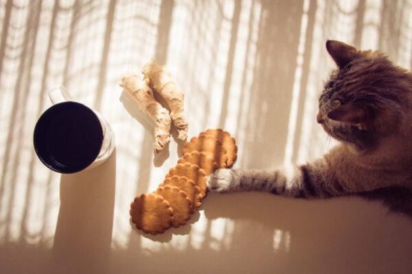 indigo moon cat food