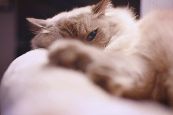 Purina Pro Plan Cat Food Recalls