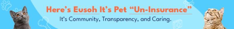 cheap cat insurance