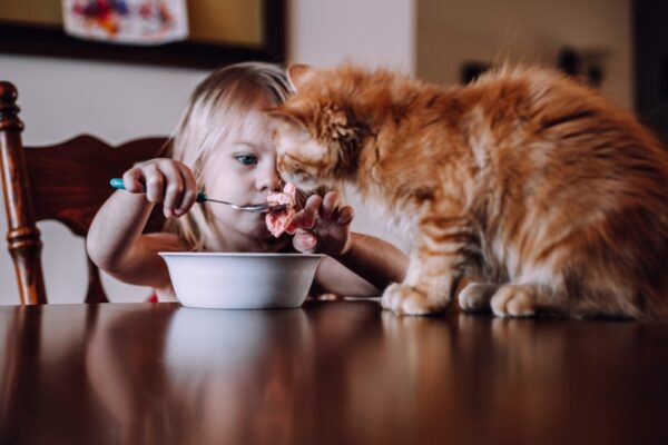 cat not eating