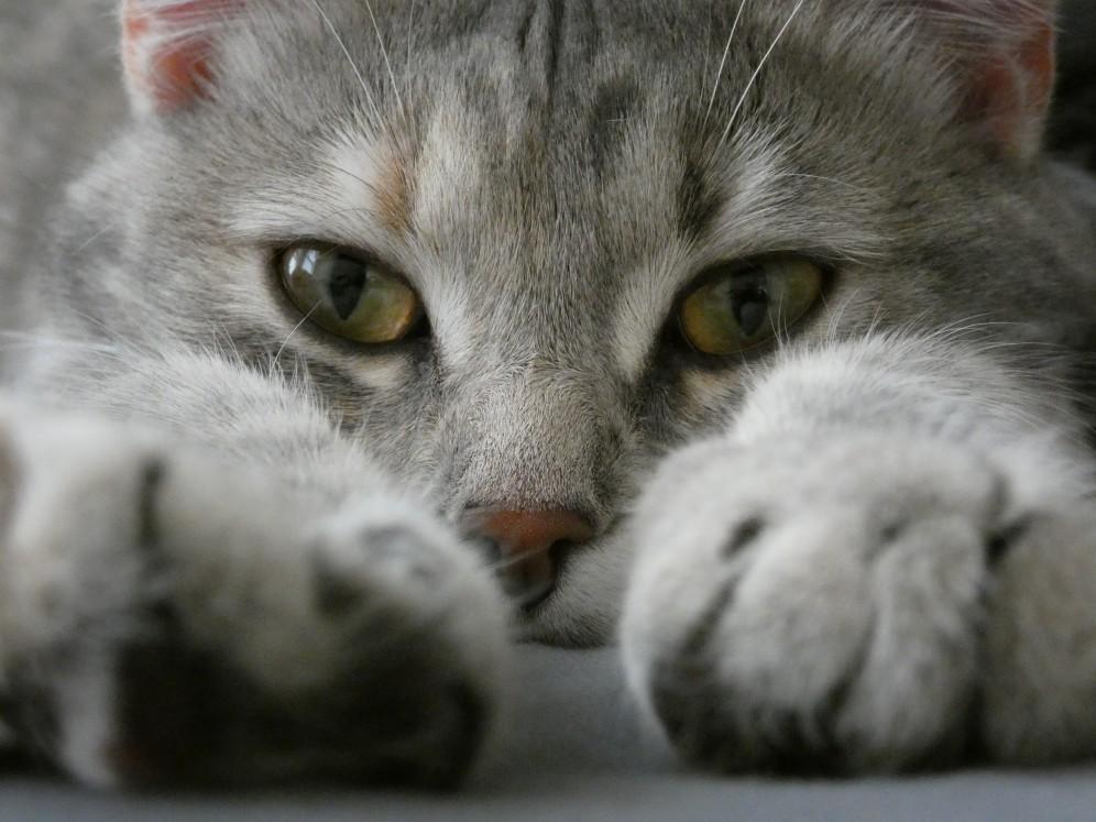do cats need rabies shots