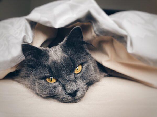 purina plan indoor cat food