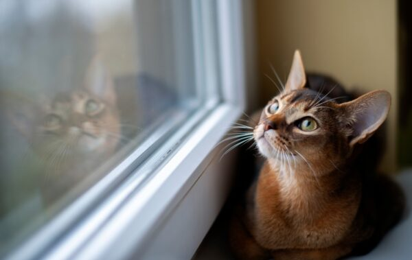 signs of uti in cats