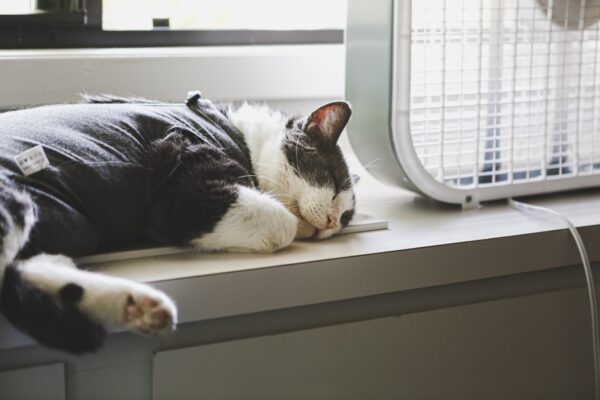 what causes uti in cats