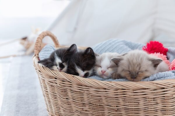 what is a pack of cats called