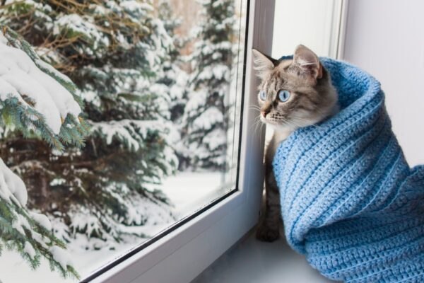 what temperature is too cold for cats