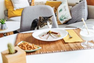 human food for cats