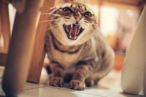 how to stop a cat from hissing