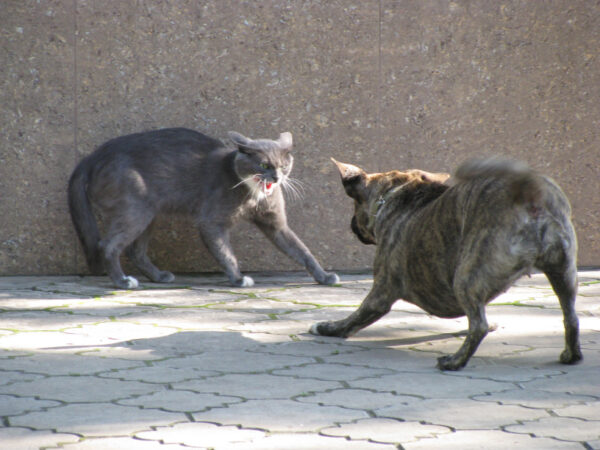 what does it mean when a cat hisses