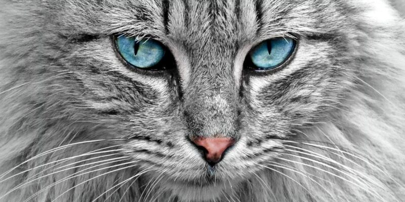Renal Diet for Cats with Kidney Failure