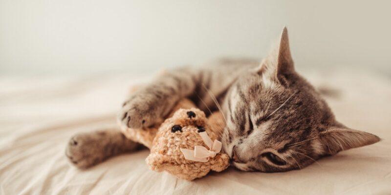 health benefits of having a cat