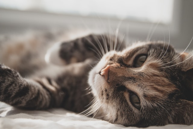 symptomes of kidney failures in cats