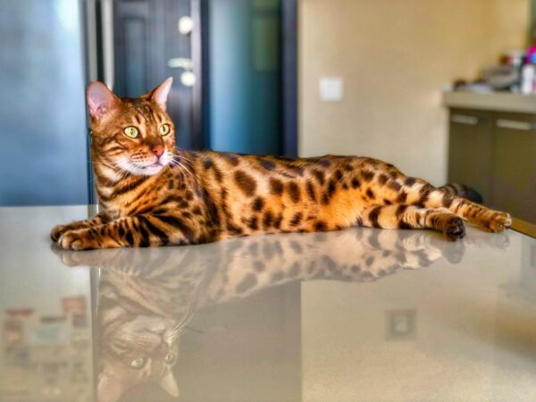 food for cats with kidney disease